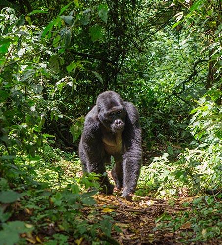 7 Days Gorillas & Tree Climbing Lions Safari