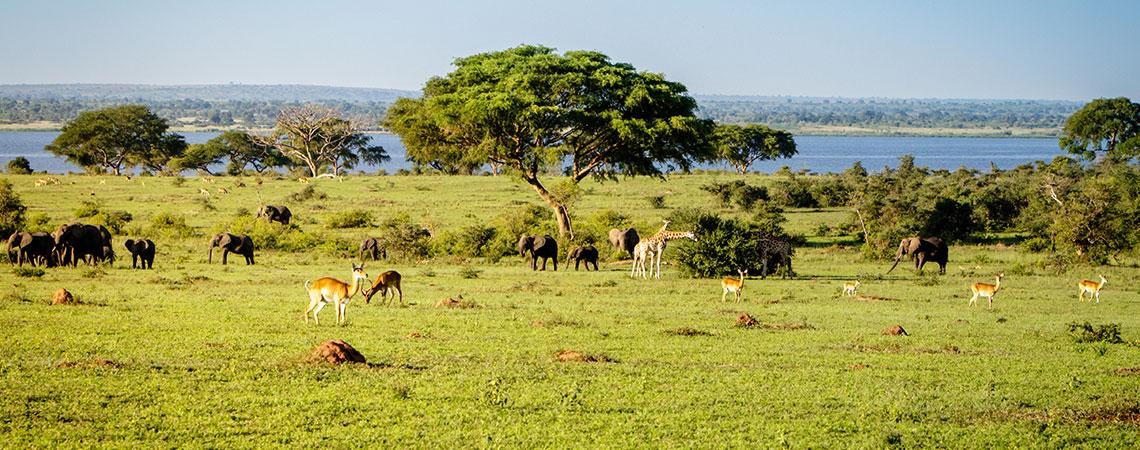 Wildlife on Uganda savannah