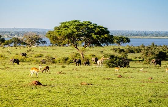 Wildflie on savannah Uganda