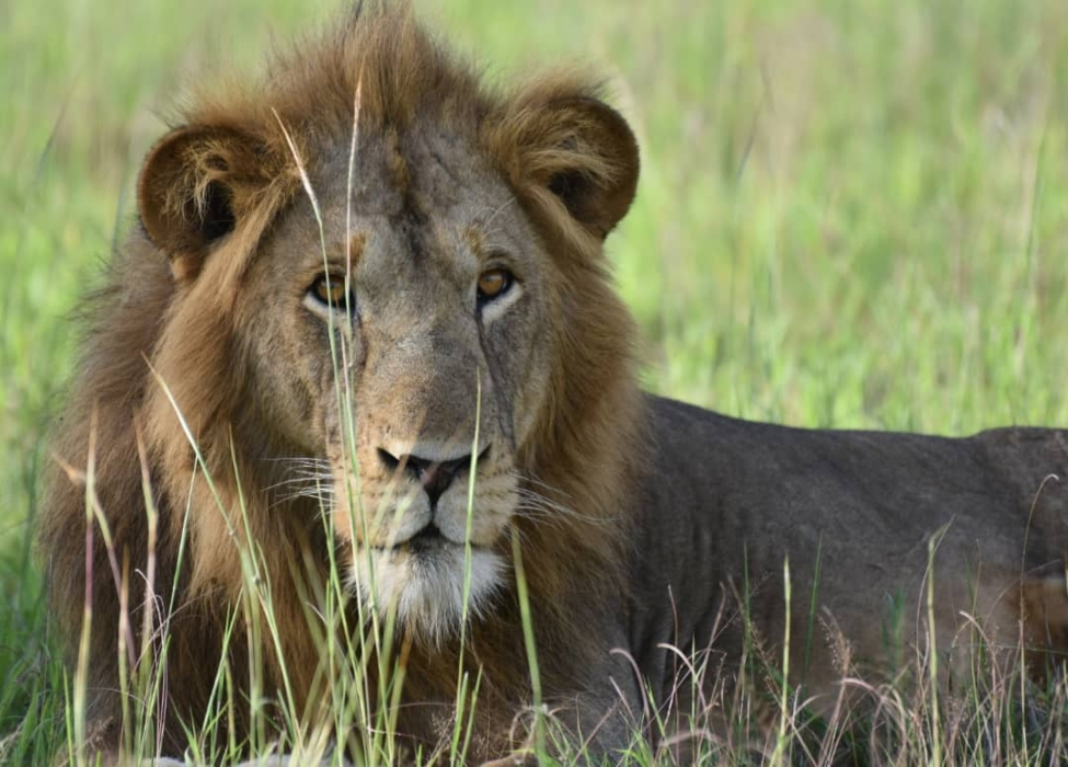 Wildlife and Safari Tours In Uganda